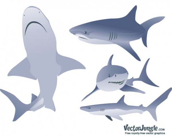 Vector Shark Illustrations web vectors vector graphic vector unique ultimate silhouettes sharks realistic quality photoshop pack original new modern images illustrator illustration icons high quality fresh free vectors free download free download design creative ai