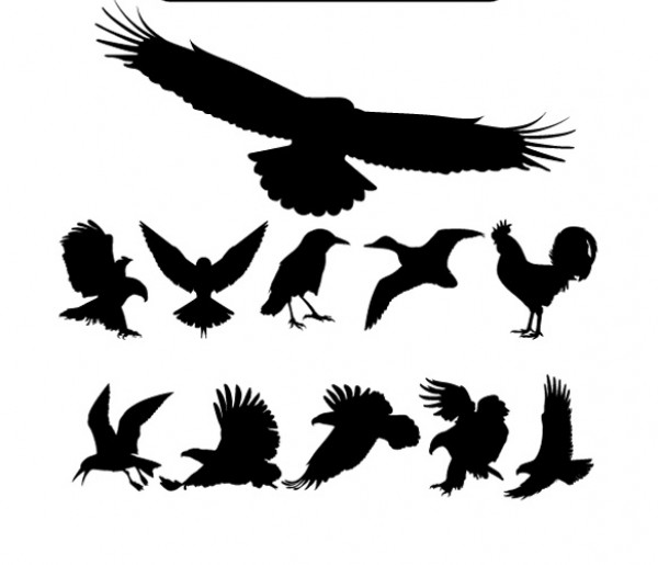 Set of Birds Silhouettes Vector wild vectors vector graphic vector unique ultra ultimate soaring eagle simple silhouettes rooster quality photoshop pack original new modern illustrator illustration high quality graphic fresh free vectors free download free eagle silhouette eagle download detailed creative clear clean birds bird silhouette ai