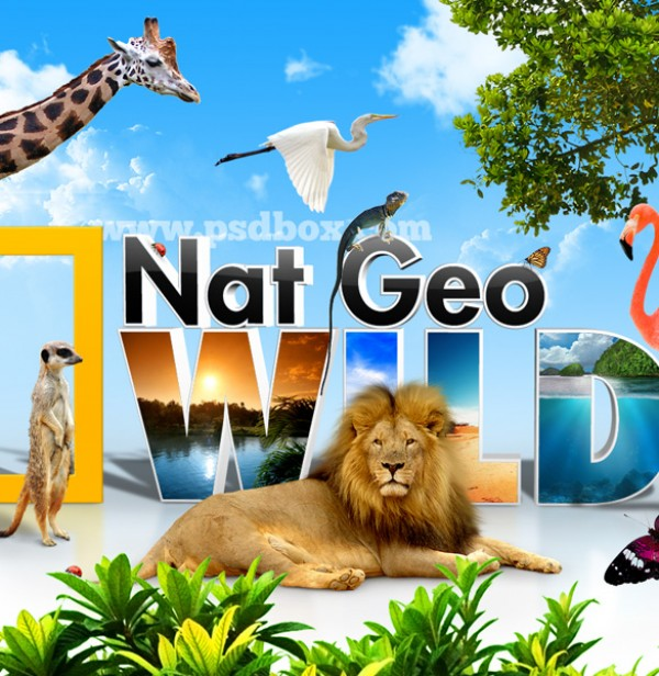 Nat Geo Wild Life Background wildlife wild vectors vector graphic vector unique tree stork quality photoshop pack original National Geographic Nat Geo modern lion illustrator illustration high quality giraffe fresh free vectors free download free flamingo download creative butterfly ai african Africa