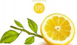 Fresh cut lemon design vector 01
