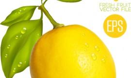 Fresh lemon shiny vector material 02
