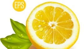 Fresh cut lemon design vector 03