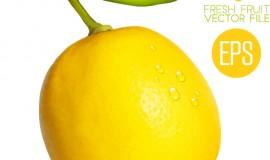 Fresh lemon shiny vector material 01
