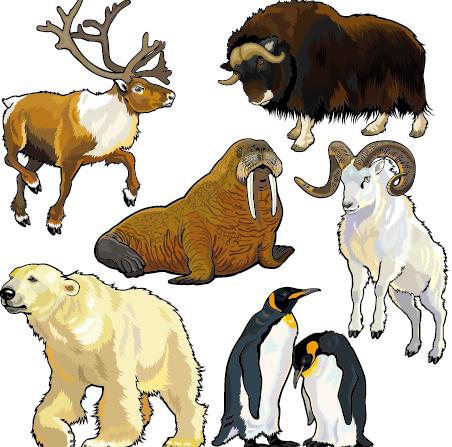 Vector set of wild animals design graphic 07 wild graphic animals Animal